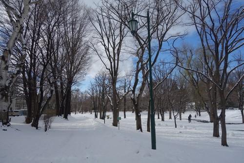 北大のポピュラ並木