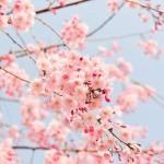 人生初、寒さ厳しい札幌の冬を乗り越えた感想