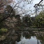ようやくようやく春が来た!暖かい季節の札幌は最高