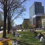 桜満開。ついに札幌に春が来た!