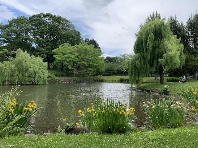 中島公園の池2
